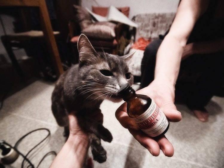 Почему коты и кошки любят валерьянку | почему так действует