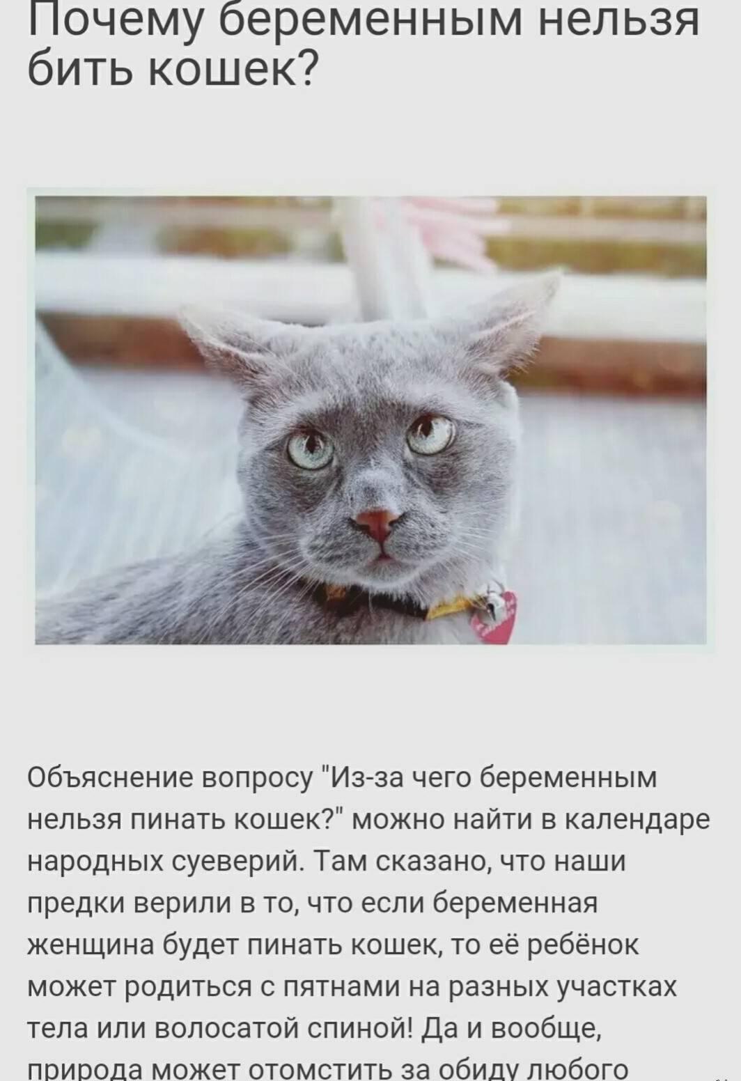 Как правильно воспитать котенка, можно ли бить и наказывать кошку