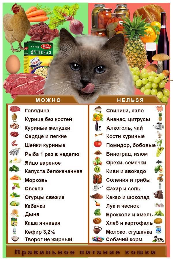 Чем кормить кастрированного кота или стерилизованную кошку в домашних условиях: советы ветеринаров