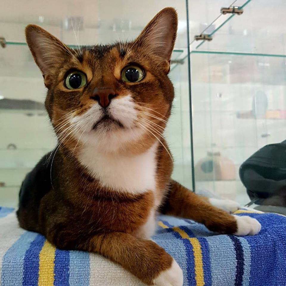 Кот или кошка: кого выбрать?
