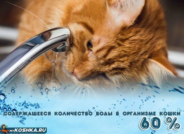 Чем поить кошку при обезвоживании. симптомы и лечение обезвоживания у кота в домашних условиях