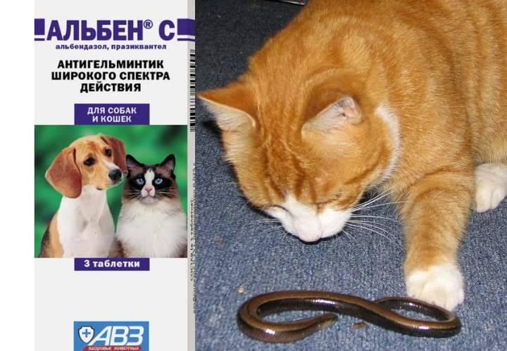 Альбен с для кошек и собак: описание, принцип действия, побочные, аналоги | наши лучшие друзья