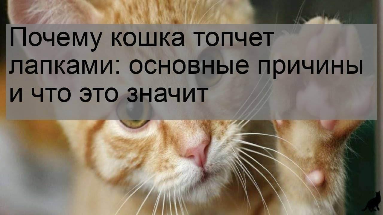 Кот постоянно лижет подушечки лап — о животных на чистоту