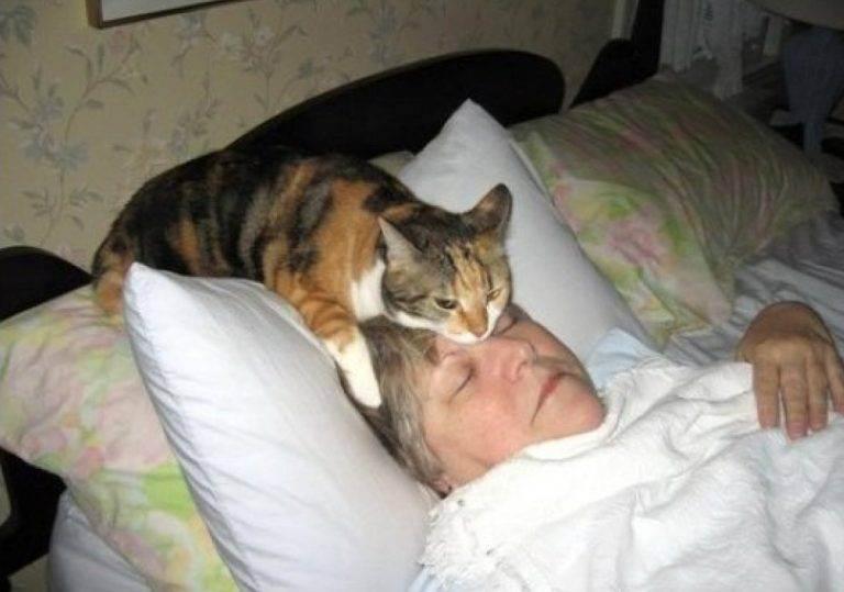 Кошка не ложится на больное место. почему кошка на больное место человека ложится | здоровье человека