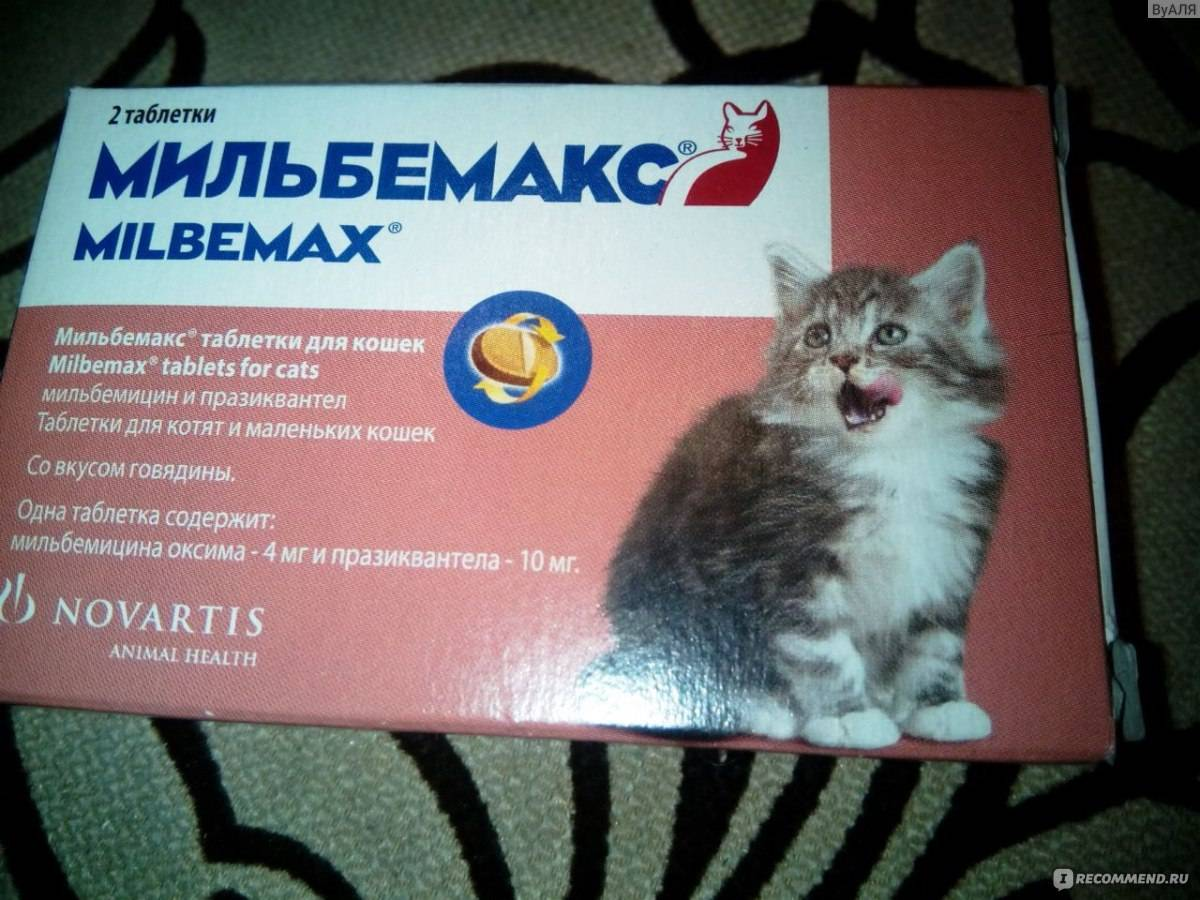 Как выбрать таблетки от глистов для кошек