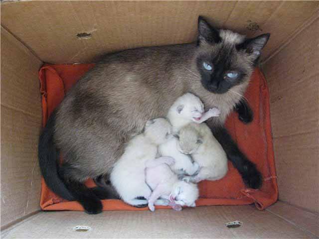 Подготовка места для родов кошки