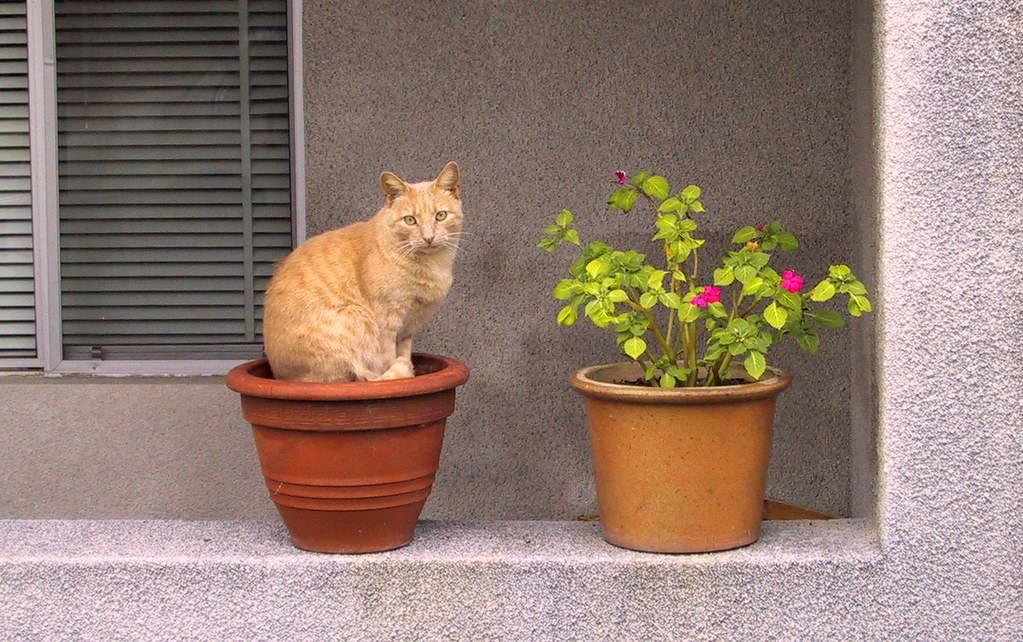 Как отучить кошку гадить в цветочный горшок? способы борьбы с проблемой