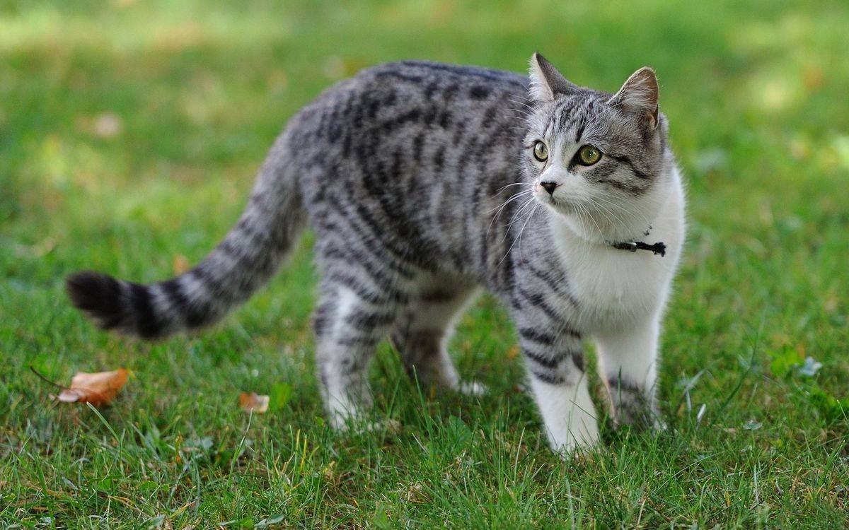 Таблица возраста кошки по человеческим меркам