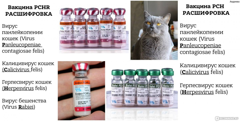 Прививки котятам: сколько и когда делать, график по возрасту
