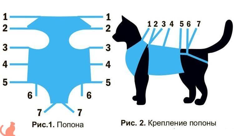 После снятия швов кошке нужно ли носить попону после