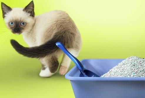 Что приготовить для встречи котенка в доме. что нужно купить перед появлением котенка. когда нужно делать прививки котятам