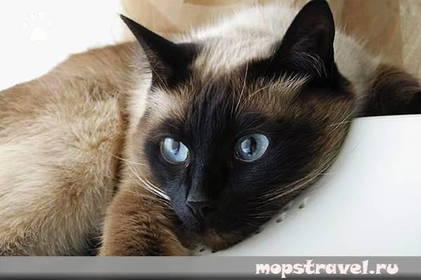 Нужна ли аптечка для кошки в дороге? что туда входит? | все про путешествия с животными