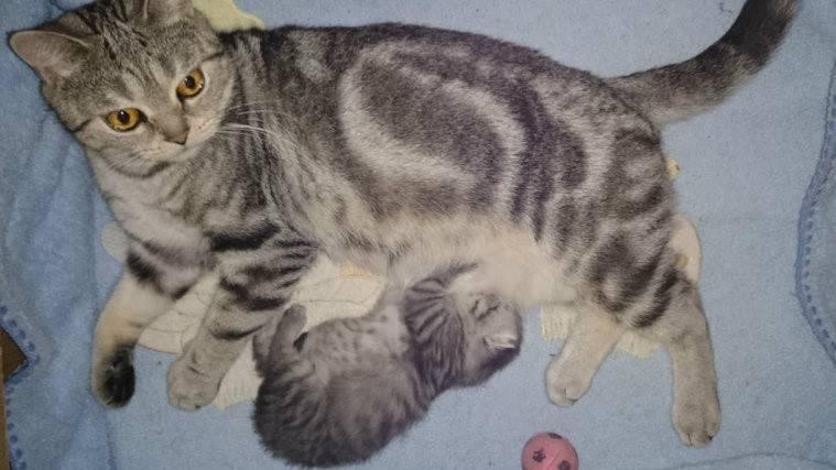 У кошки большой живот по бокам. если у кота большой живот, а сам он худой. что делать, если у кошки вздулся живот