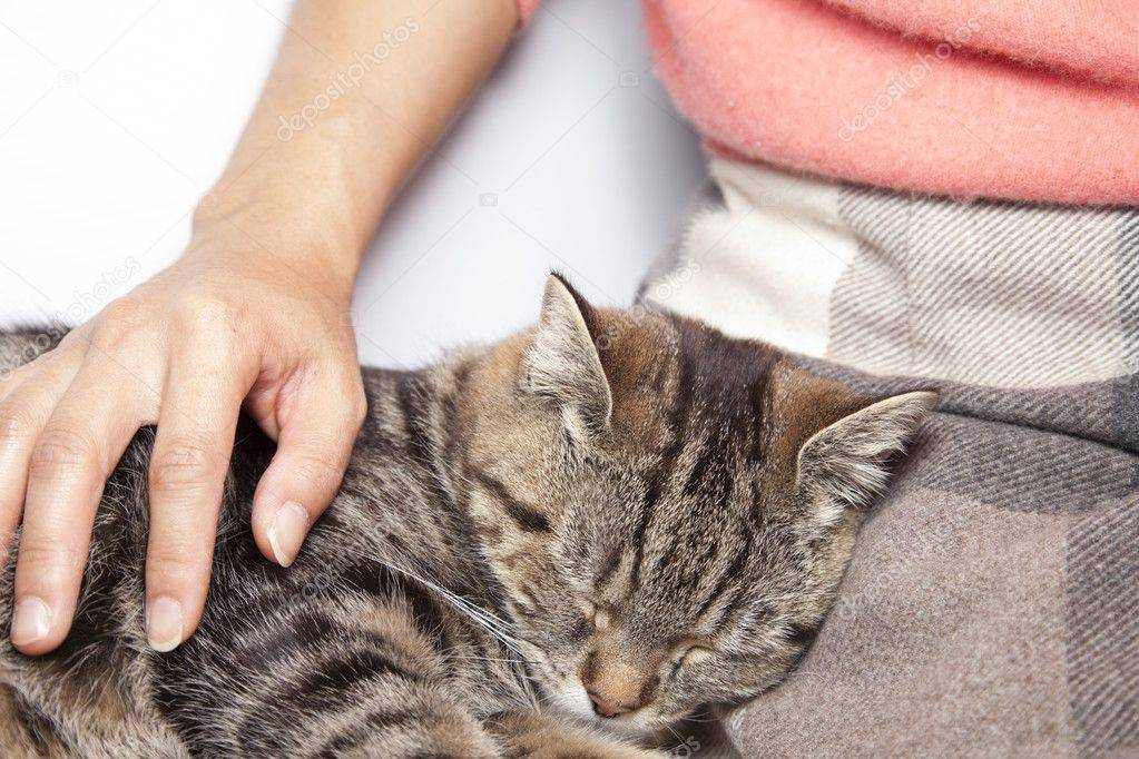 Приступ острой сердечной недостаточности у кошки