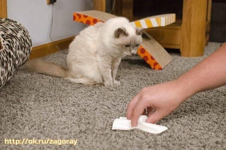 Почему от кота пахнет мочой?