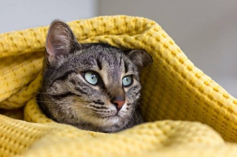 Почему кошка, кот, котенок мяукает и прячется под одеяло