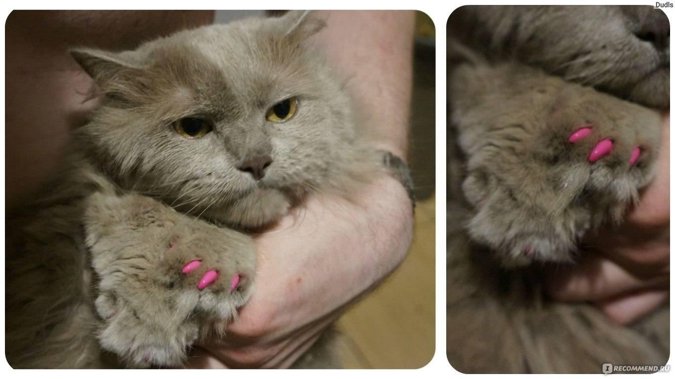 Антицарапки для кошек и котов   фото, цена, инструкция, отзывы