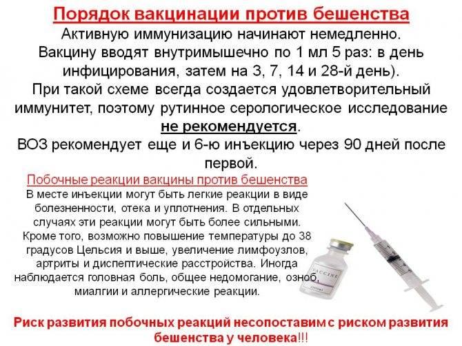 Комплексная вакцинация кошек: лучшие отечественные и зарубежные вакцины, показания к прививке