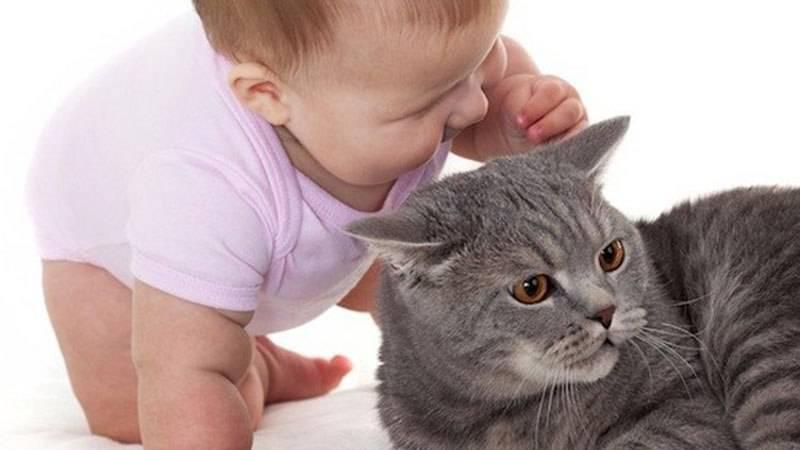 Аллергия на кошек у ребенка: диагностика и лечение