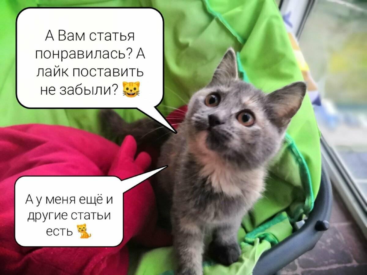 Почему кошка не ласковая | зоомир