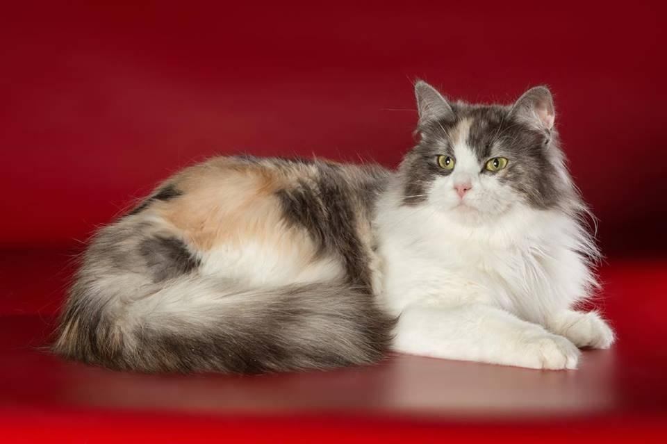 Все породы кошек с фотографиями
