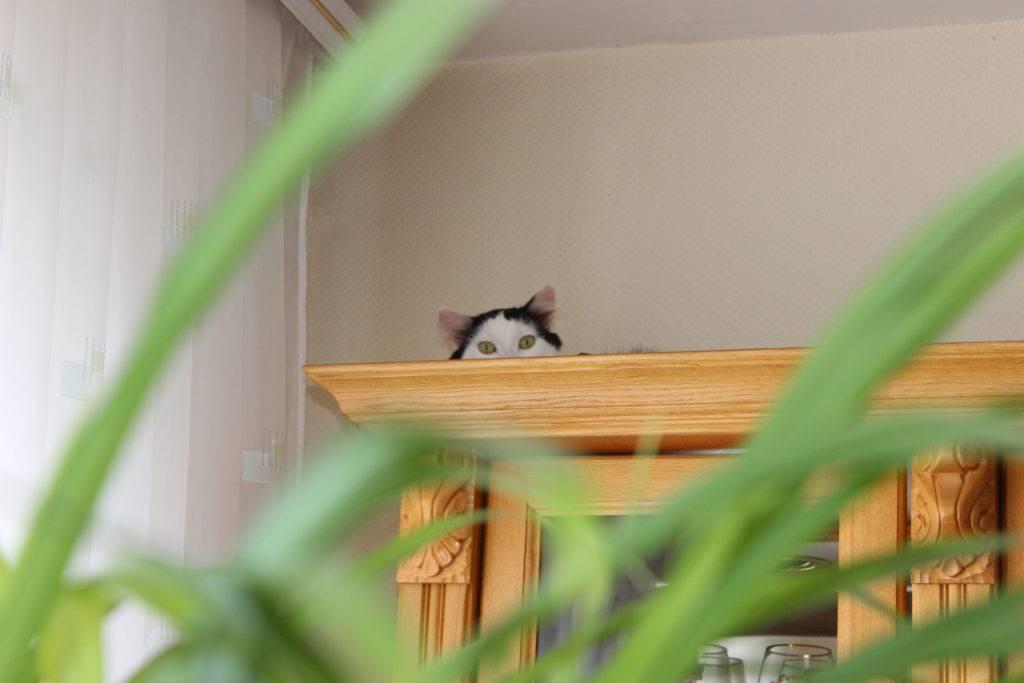 Пропал кот – что делать?