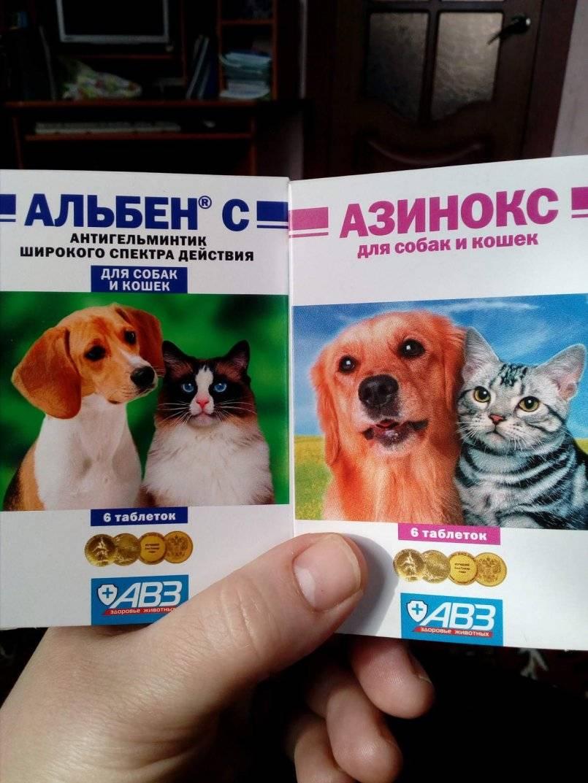 Альбен с для собак: универсальное средство от кишечных паразитов