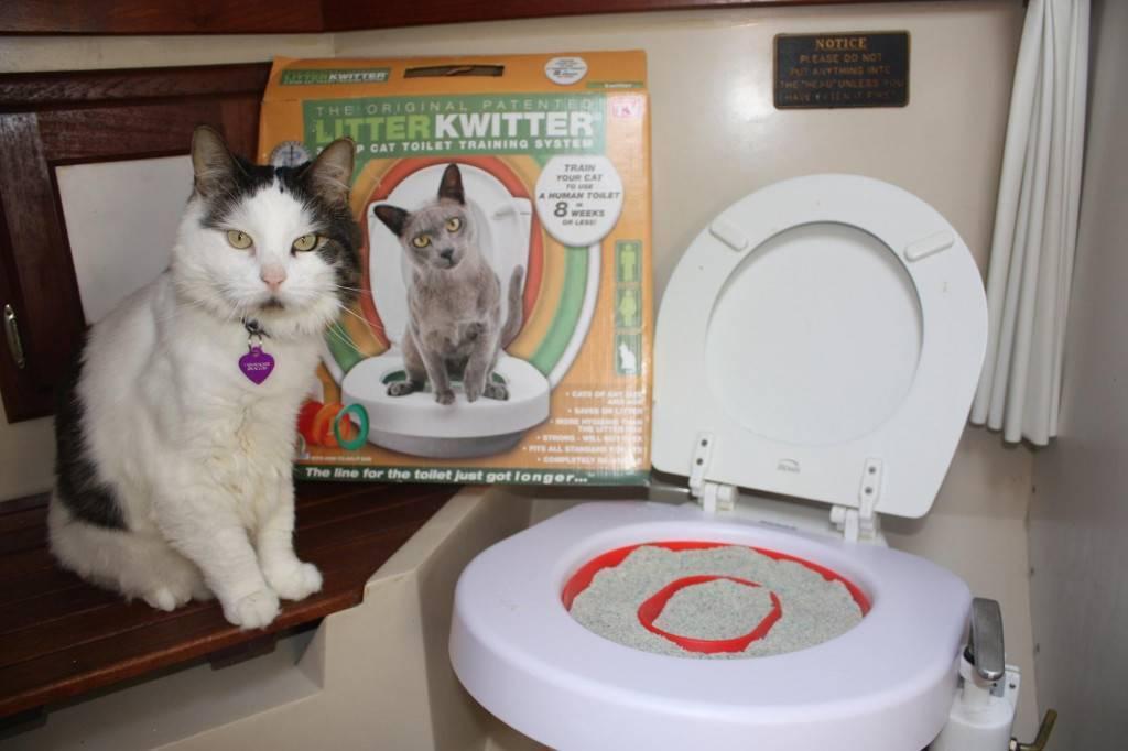 Специальный лоток для приучения кошки к унитазу