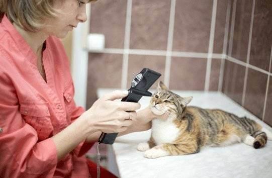 Как откормить кошку? - как откормить шотландскую кошку - запись пользователя kate (gfybjnjdf) в сообществе домашние животные в категории кошки. болезни, прививки, советы по уходу - babyblog.ru