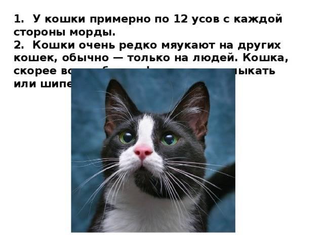 Интересные факты: кошки
