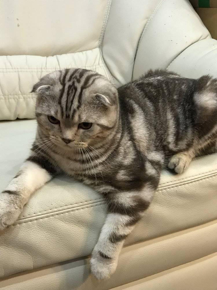В каком возрасте кастрируют котов: нюансы и методы стерилизации