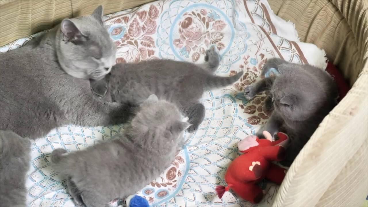 Вес котенка по месяцам: таблица