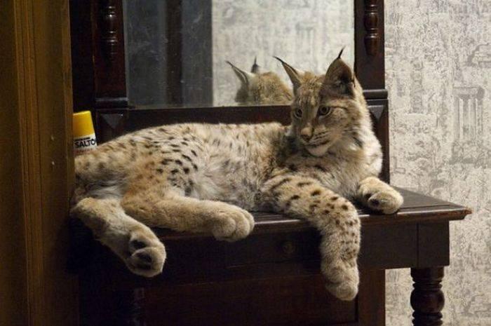 Какое домашнее животное лучше завести в квартире?