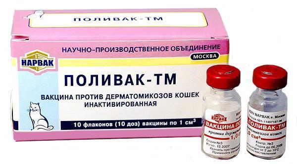 Вакцина «поливак-тм» для кошек: описание, инструкция по применению