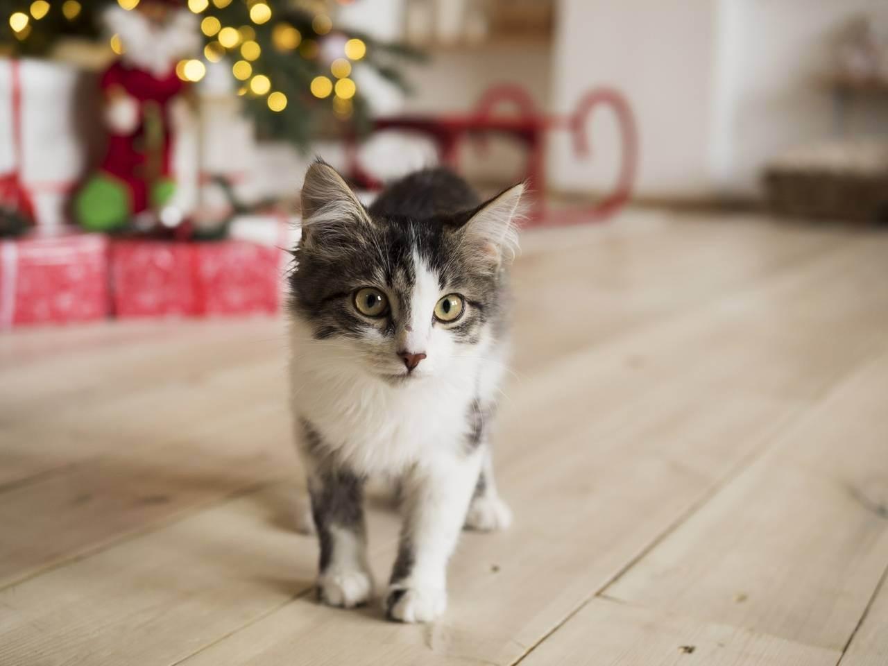 Очень худая кошка – как её откормить?