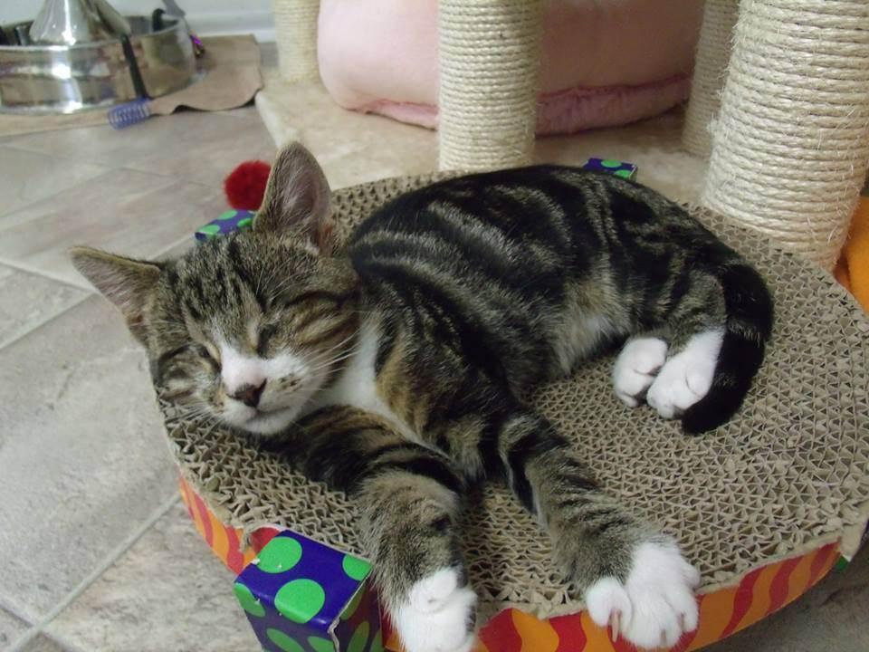Как отучить кошку ссать на диван???