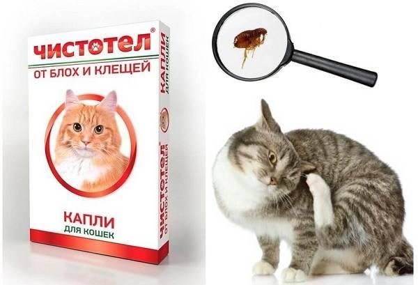 Обзор капель на холку от блох для кошек и котят