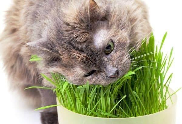 Можно ли намыть котенка 1 месяц дегтярным мылом