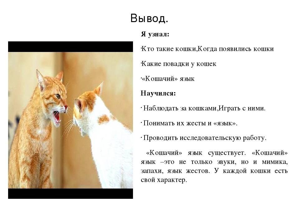 Интересные повадки кошек и их значение