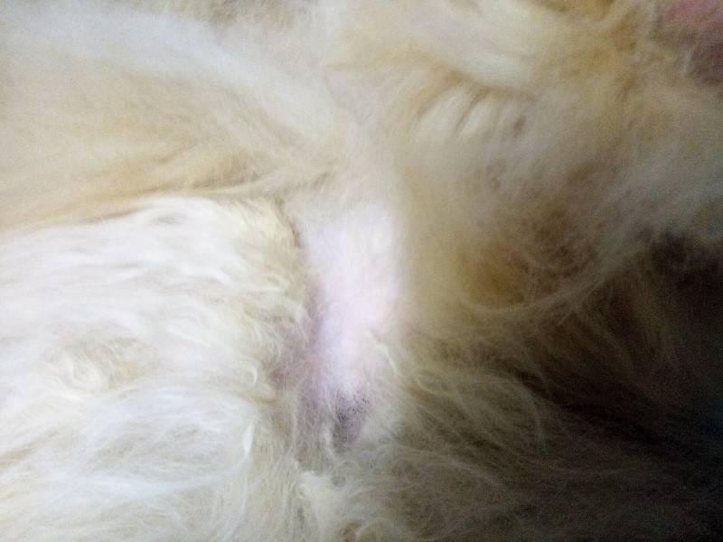 Почему у кошки выпадает шерсть: причины, симптомы и лечение