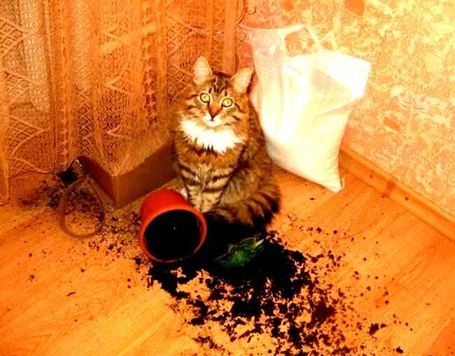 План мероприятий по отучению кота лазить в цветочный горшок