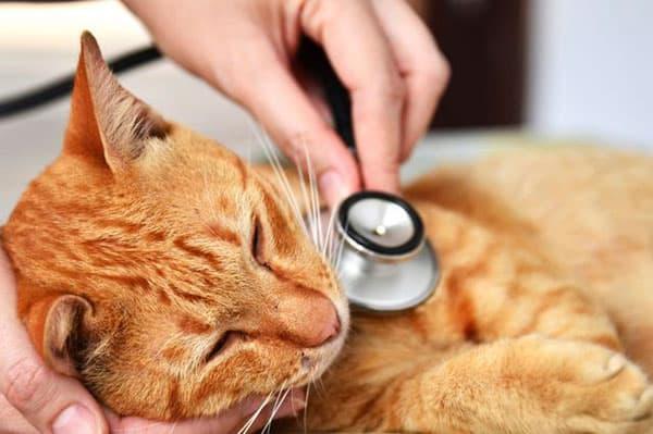 Причины отказа от еды у кошек: почему у кота плохой аппетит или он ничего не ест, симптомом каких болезней это бывает?