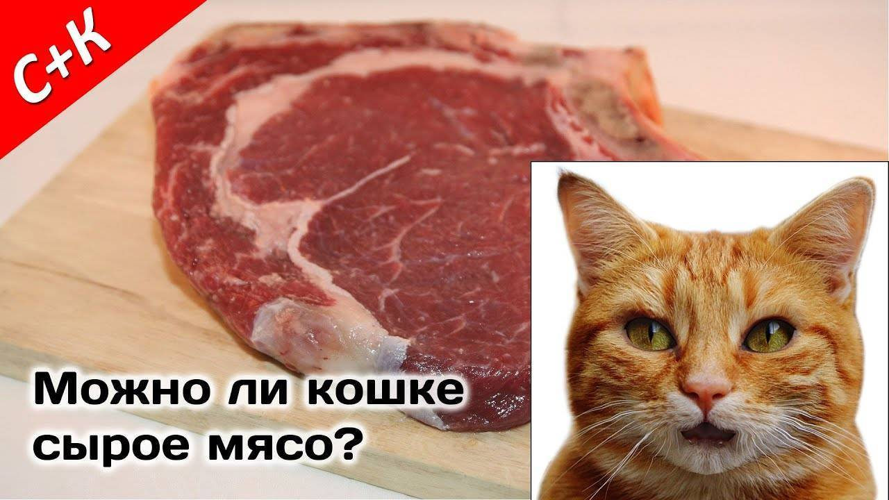 Ох, не кормите кошку рыбой!
