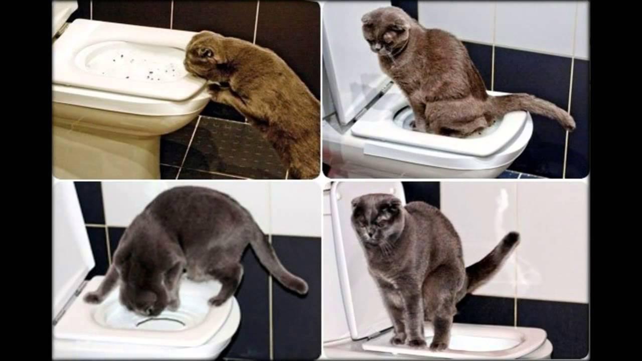 Какой наполнитель для кошачьего туалета самый лучший. помогаем выбрать