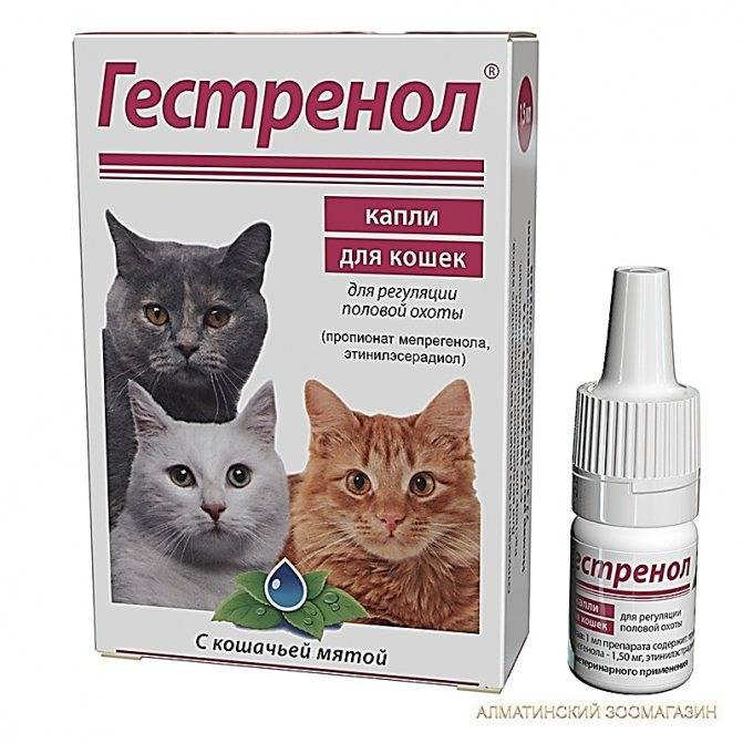 У кошки течка — нужен ли специальный укол?