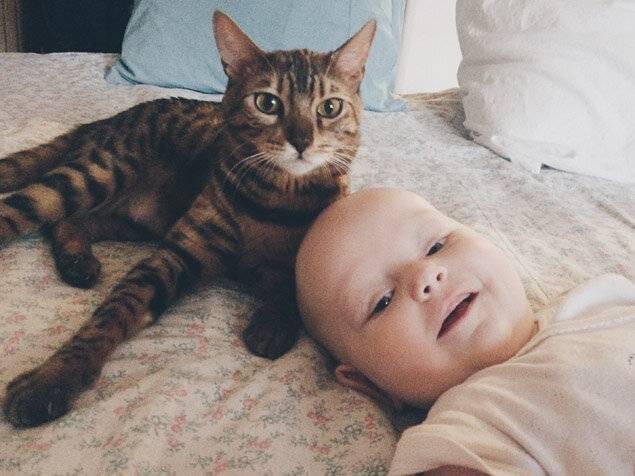 Кошка и новорожденный...можно или нельзя?