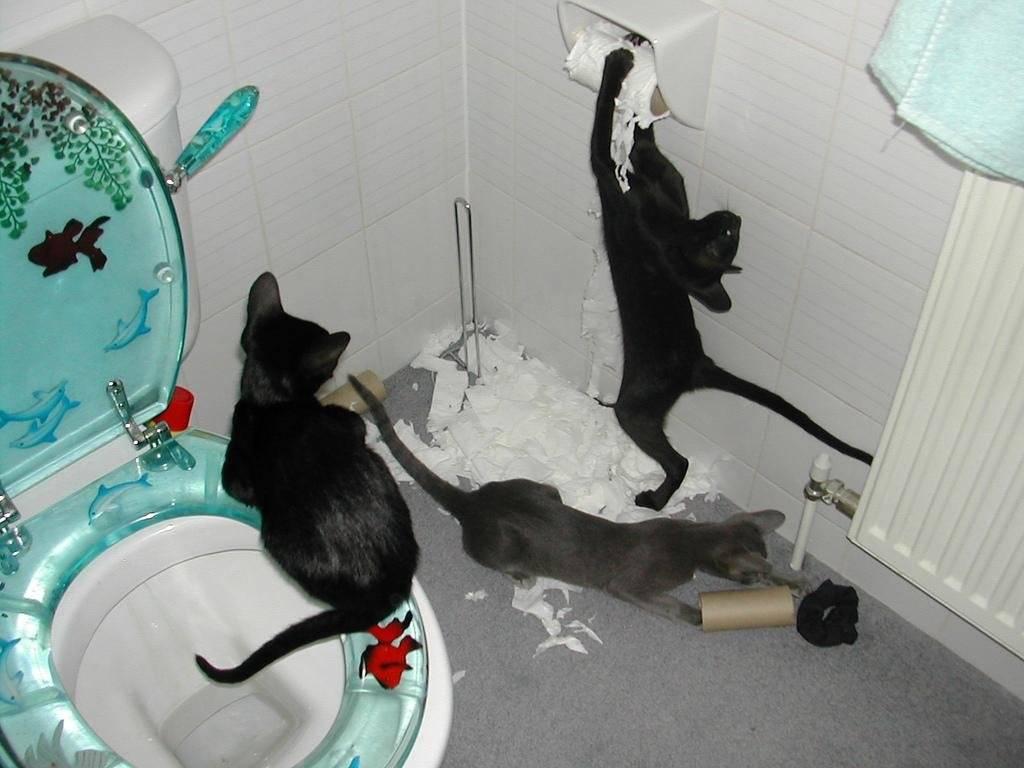 У кошки течка после стерилизации: почему гуляет, что делать