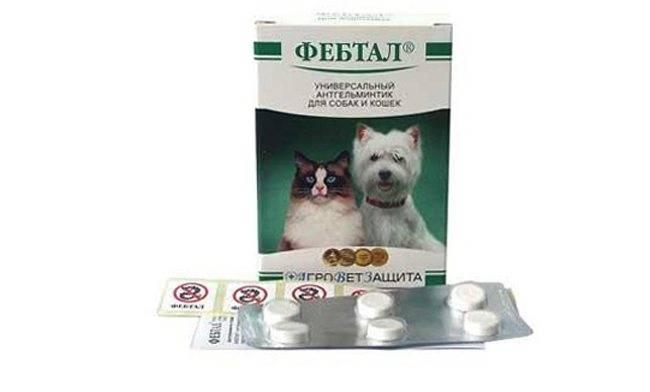 Инструкция по применению и отзывы на фебтал для собак. препарат фебтал для кошек: особенности применения фебтал для собак и кошек