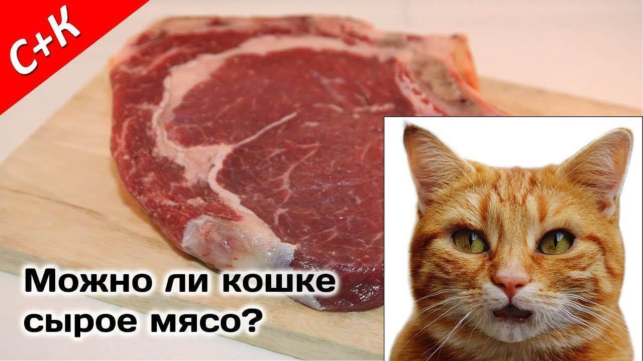 Можно ли кота кормить сырым мясом? можно ли кормить кошку свининой, курятиной и говядиной? какое мясо нежелательно употреблять и какое категорически нельзя?