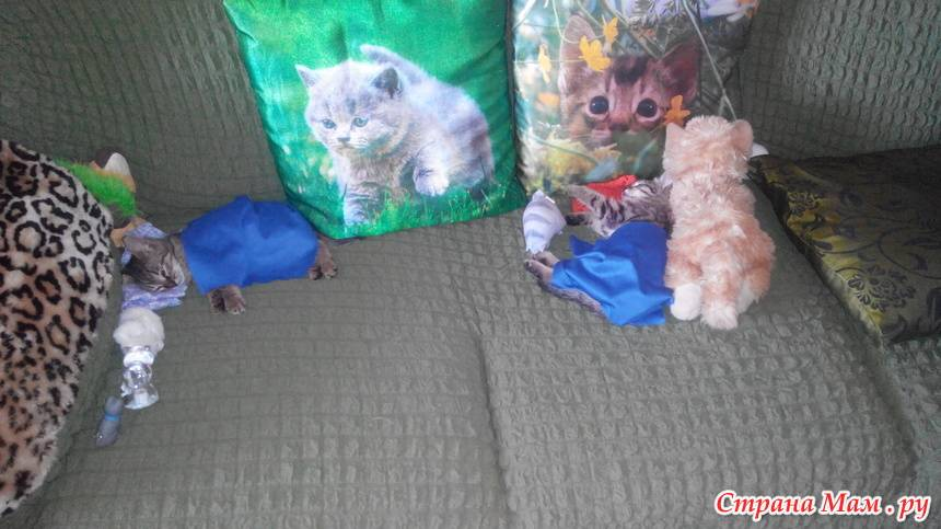 Таблица веса котенка – беспородного и разных пород – по возрасту: сколько в норме весит малыш в 1–2, 3–4, 5–6 месяцев?